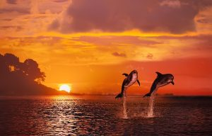Lumba lumba Pantai Lovina